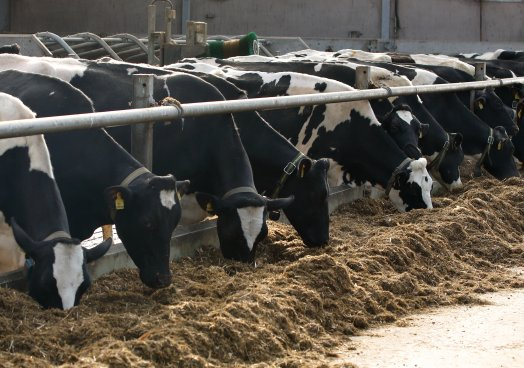 Dairy outlook end of 2020/early 2021 - Commodity watch by senior policy officer Chris Osborne