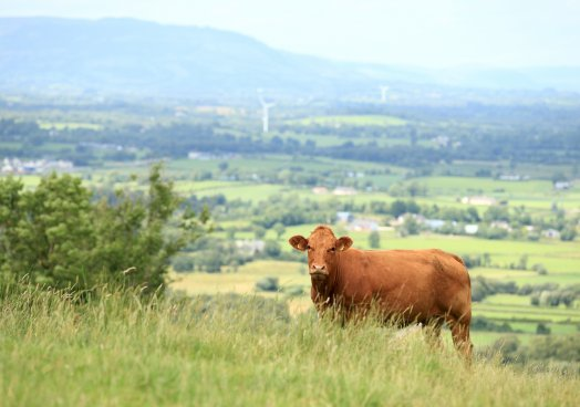 Solutions to deliver sustainable beef production webinar