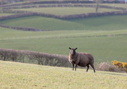 UFU livestock worrying campaign