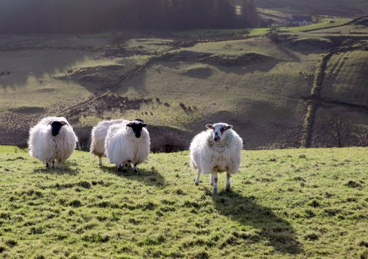 UFU respond to DEFRA review on British Wool