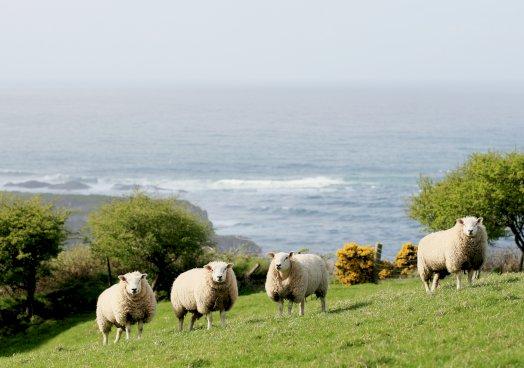 Love Lamb Week roundup