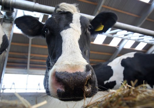 Sector in sixty - Electricity on NI dairy farms